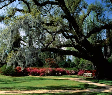 Bucket List: Charleston
