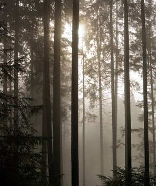 World's Most Haunted Forests: Black Forest