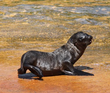 Cutest Baby Animals at U.S. Zoos: Tank, Sea Lion, Omaha's Henry Doorly Zoo & Aquarium, NE