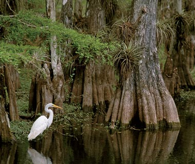 Top Florida Attractions: The Everglades