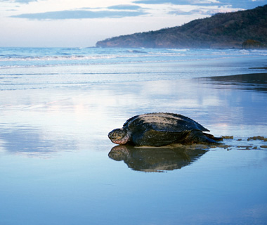 Best Beaches on Earth: Las Baulas National Park, Playa Grande, Costa Rica