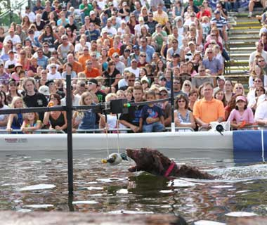 Coolest Vacations for Dog Lovers: Dockdogs