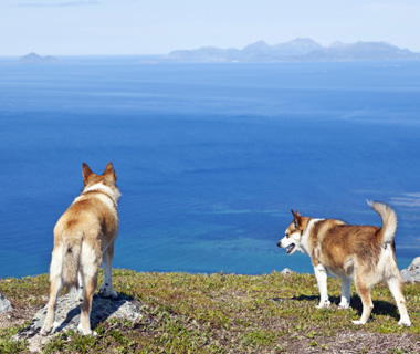 Coolest Vacations for Dog Lovers: Lundehund Gathering