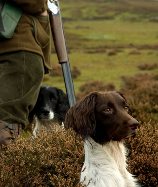 Coolest Vacations for Dog Lovers: North American Gun Dog Association Nationals