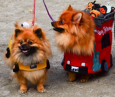 Coolest Vacations for Dog Lovers: Tompkins Square Halloween Dog Parade
