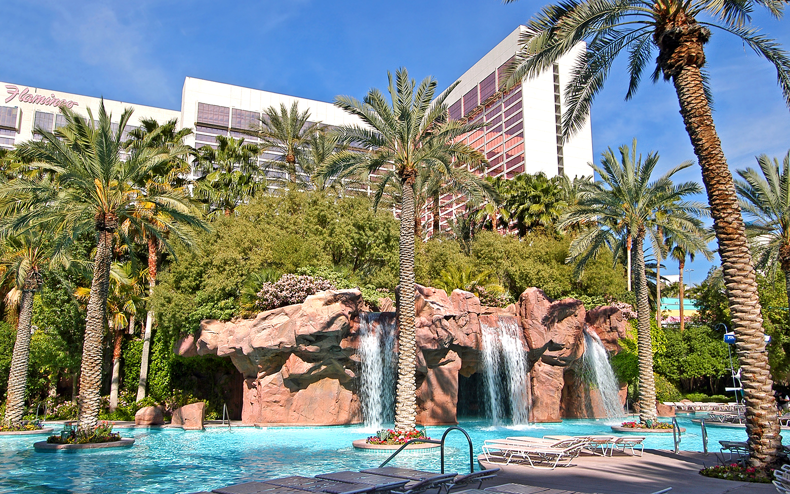 Best Pools in Las Vegas: GO Pool, Flamingo