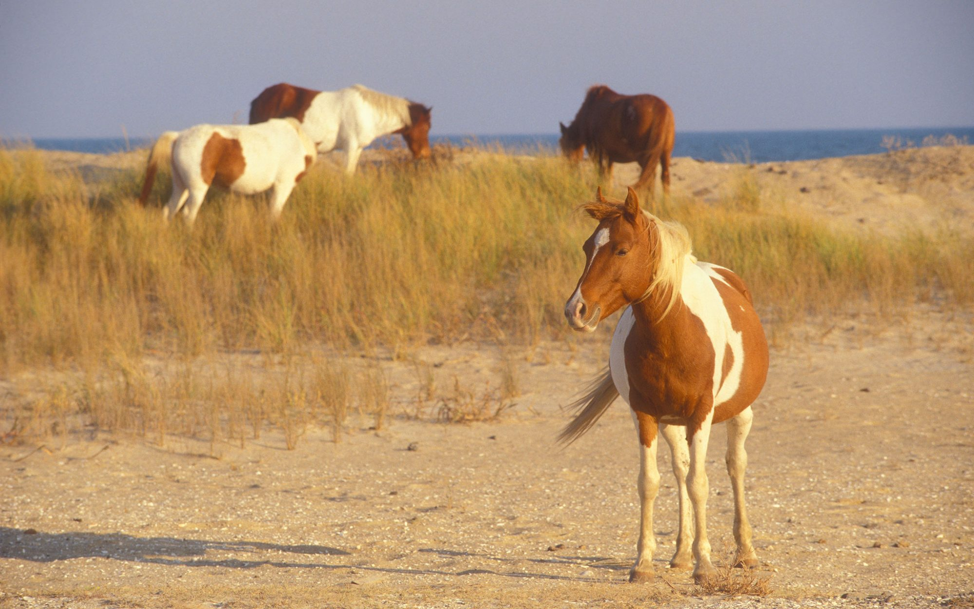 Chincoteague, VA