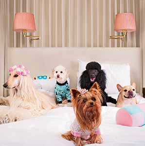 201306-a-dog-friendly-hotels