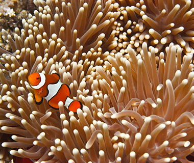 Beautiful Underwater Photos: clown fish, Great Barrier Reef