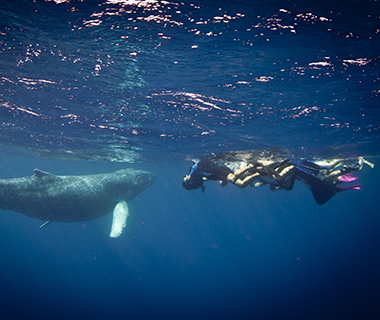 Beautiful Underwater Photos: humpback whale