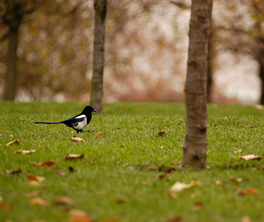 World's Weirdest Superstitions: magpies, United Kingdom