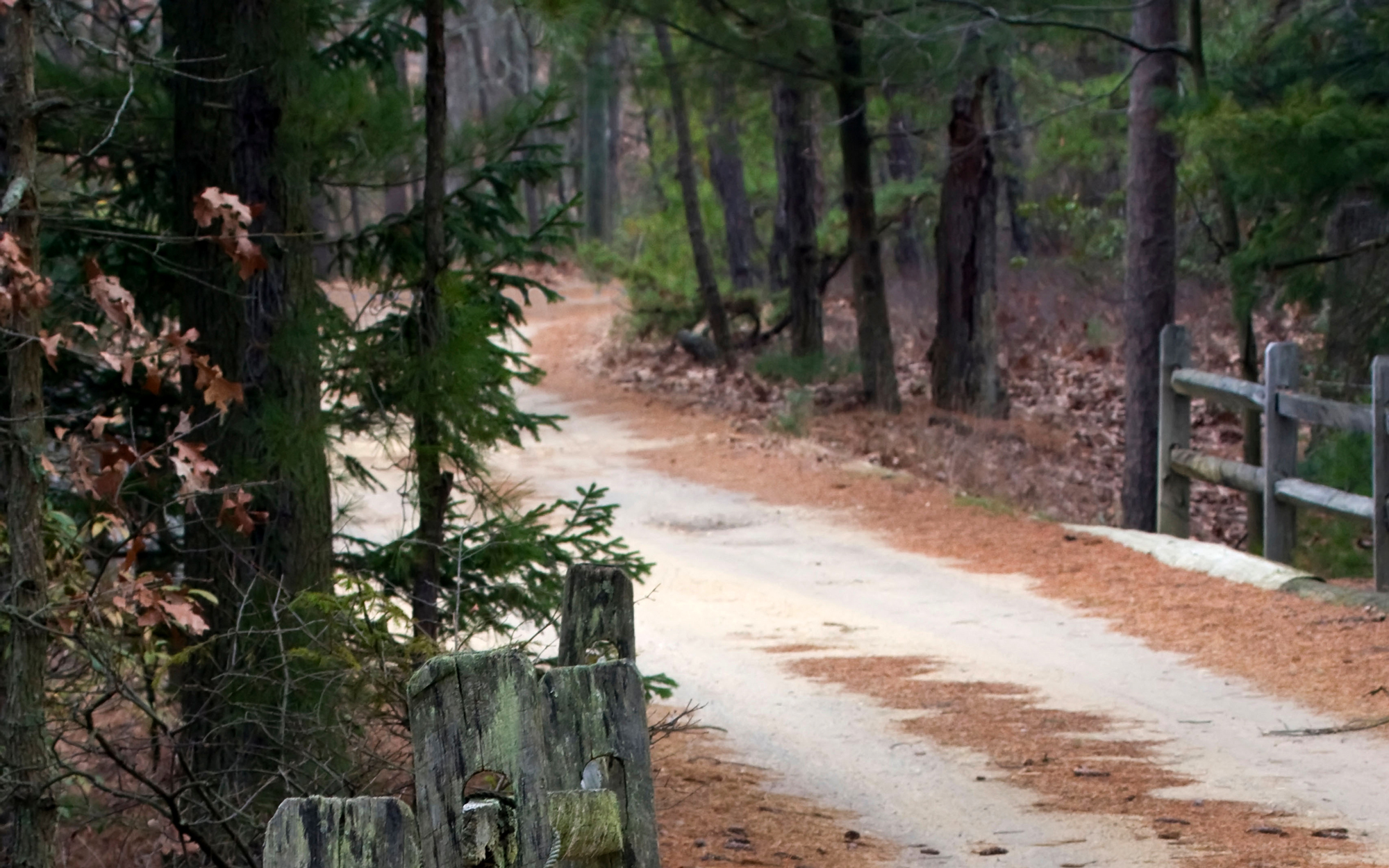 America's Most Haunted Places: The Pine Barrens
