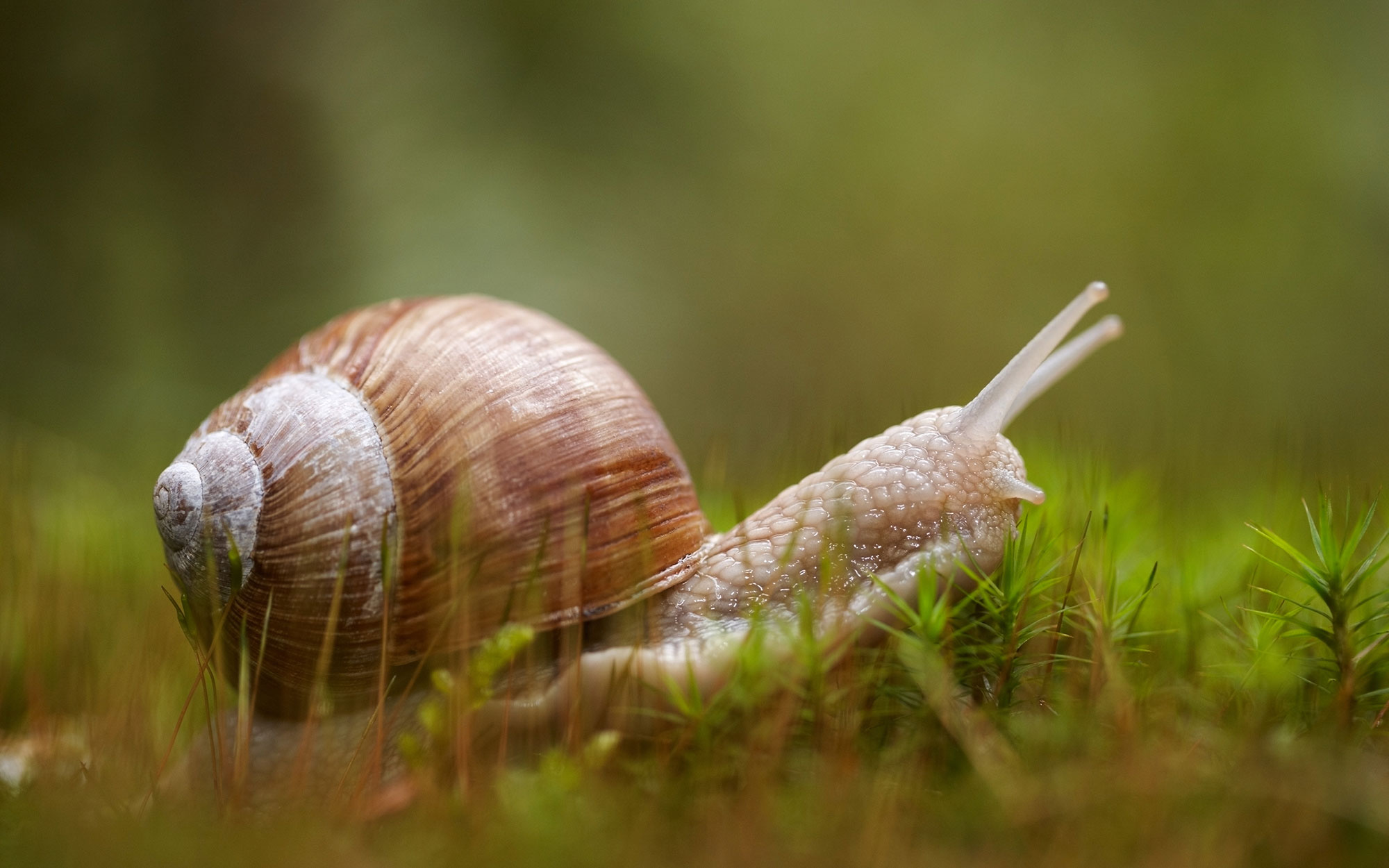 World's Strangest Cold Remedies: Snail Syrup