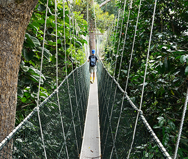 World's Longest Bridges: Taman Negara Canopy Walk