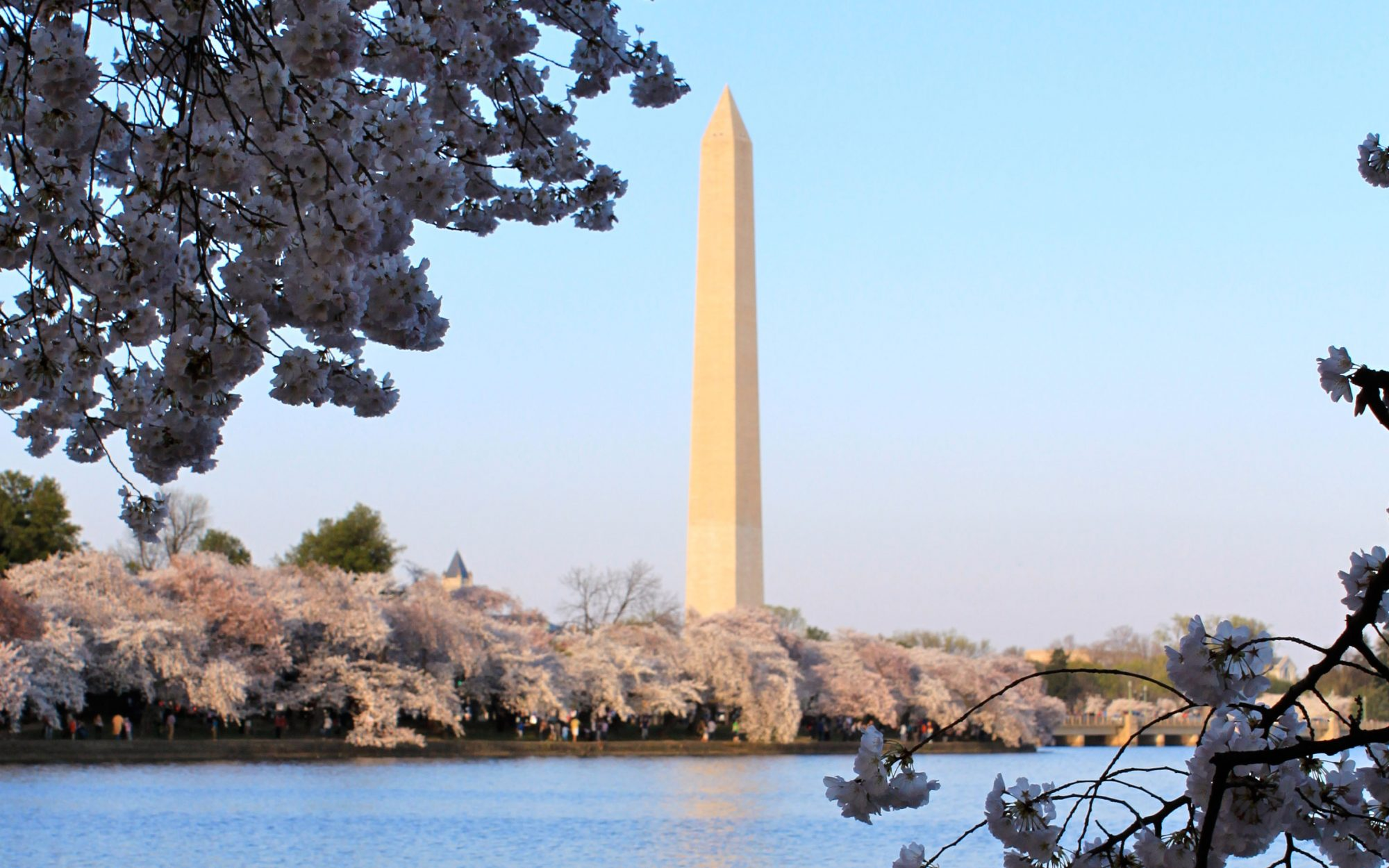 Great Spring Weekend Getaways: Cherry Blossoms on D.C.'s National Mall