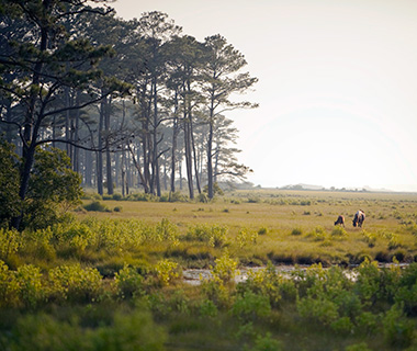 America's Most Scenic Waterside Drives: The Eastern Shore, Virginia