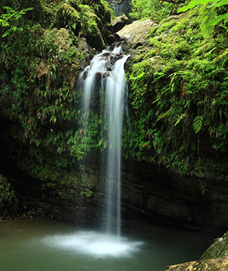 Mexico City Weekend Getaways: El Yunque Rainforest