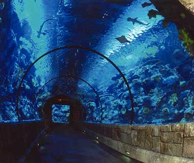 What to Do in Las Vegas: Shark Reef at Mandalay Bay