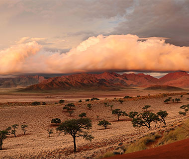 For the Wildlife Lover: Namibia