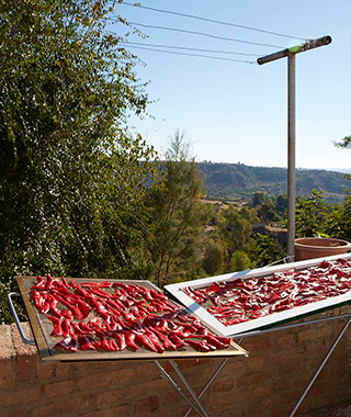 Sun-dried Red Peppers in Bernalda, Basilicata Italy
