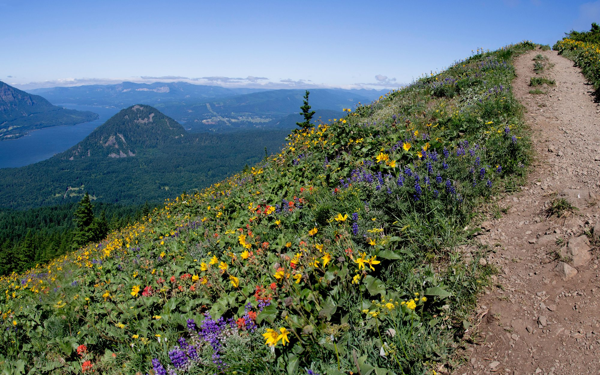 Best Views in America: Dog Mountain, Columbia River Gorge, WA