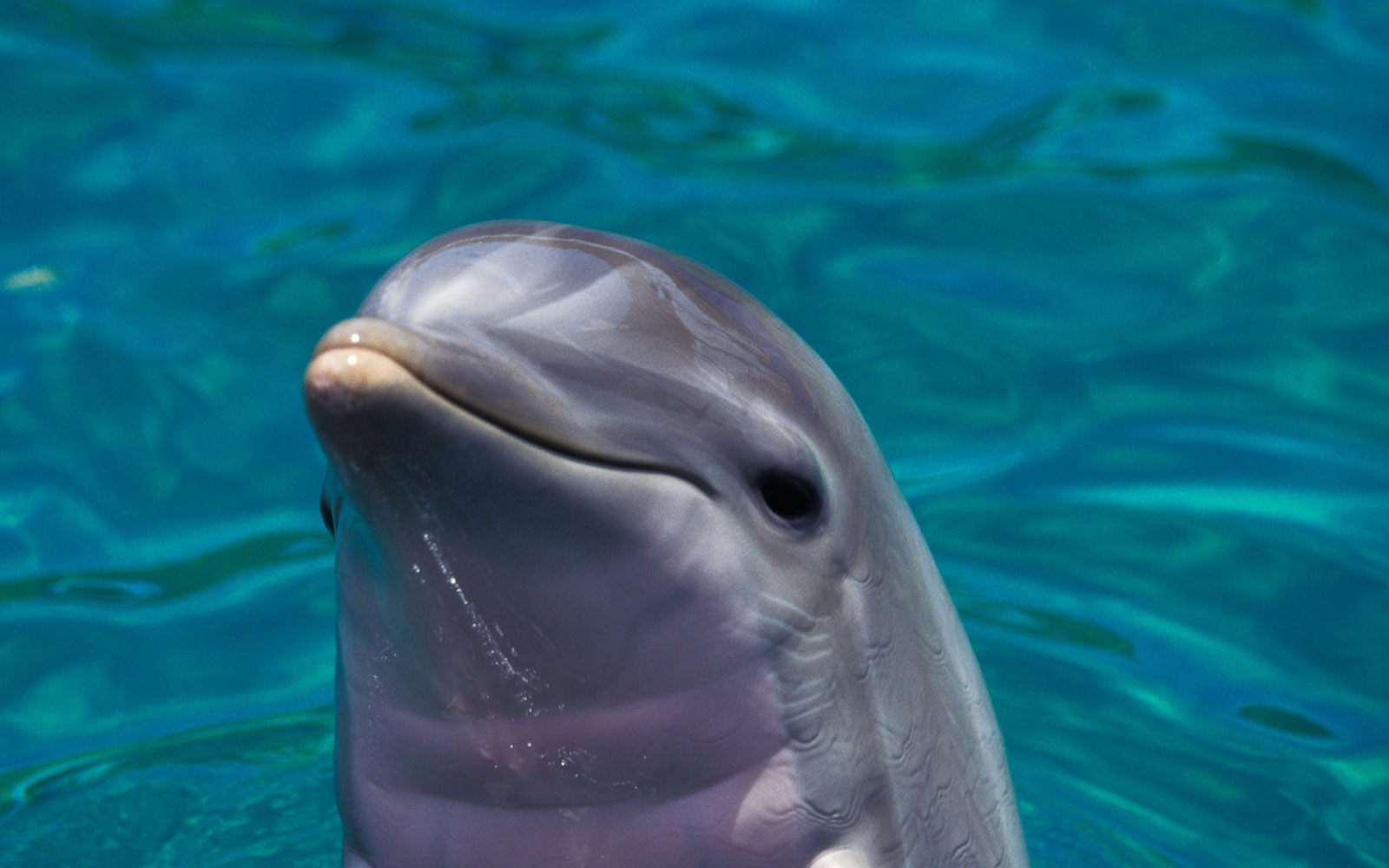 Best Places to See Baby Animals: Baby Bottlenose Dolphins, Fort Myers, FL