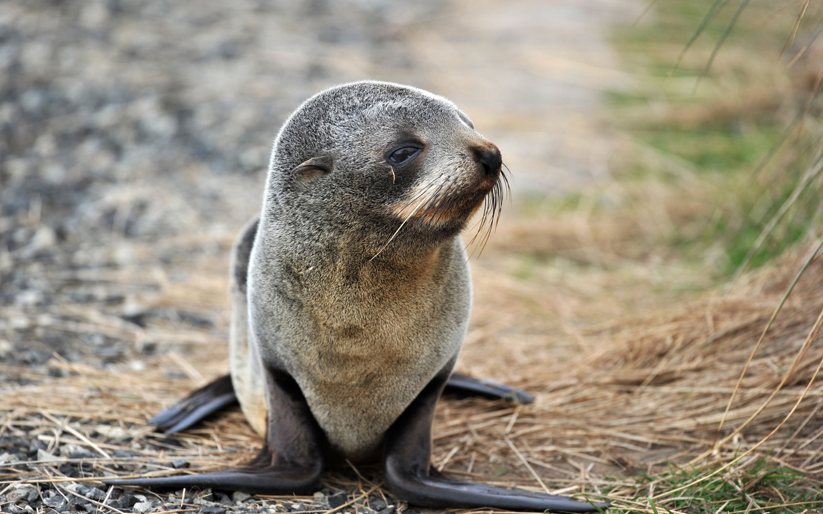Best Places to See Baby Animals: Fur Seals, New Zealand