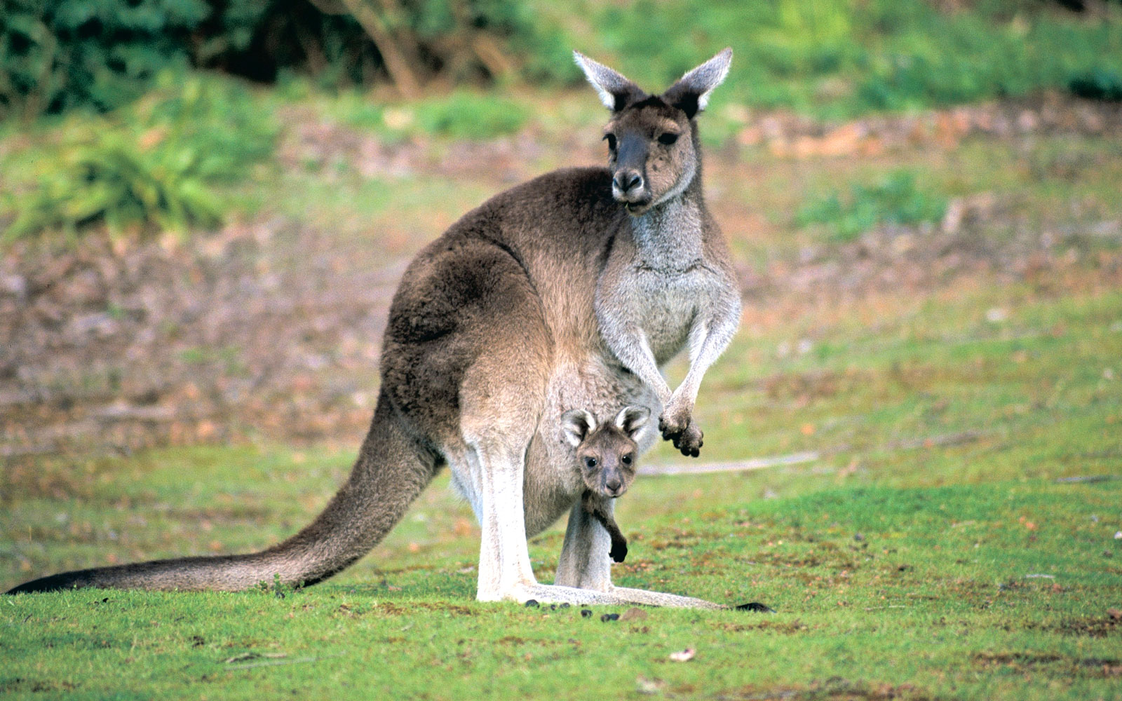 Best Places to See Baby Animals: Joeys, Australia
