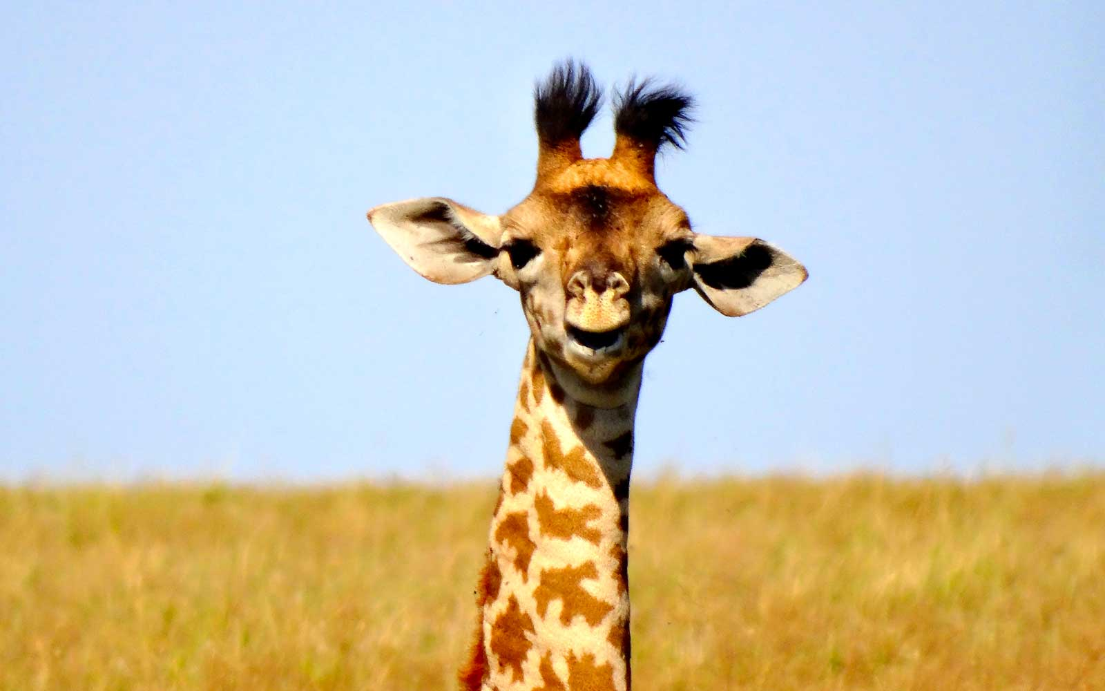 Best Places to See Baby Animals: Giraffes, Kenya