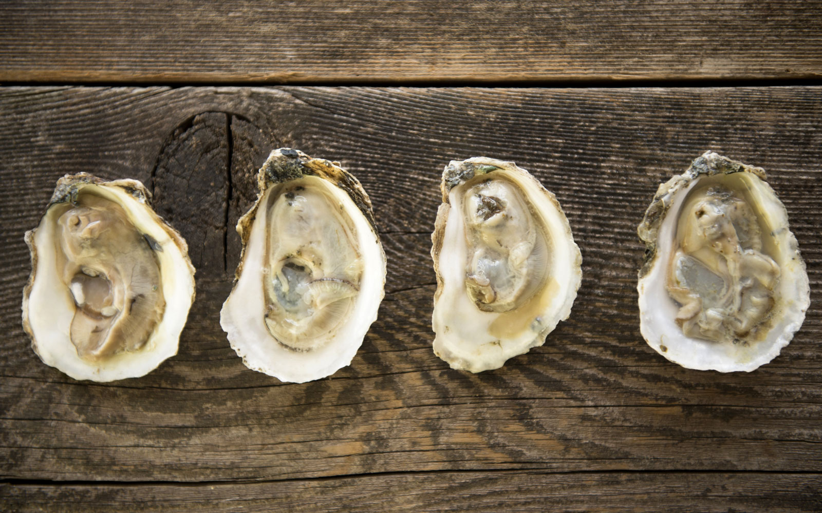 Best Oyster Bars in America: Gilhooley's Raw Bar, San Leon, TX