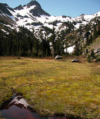 Puget Sound Getaway From Seattle: Olympic National Park
