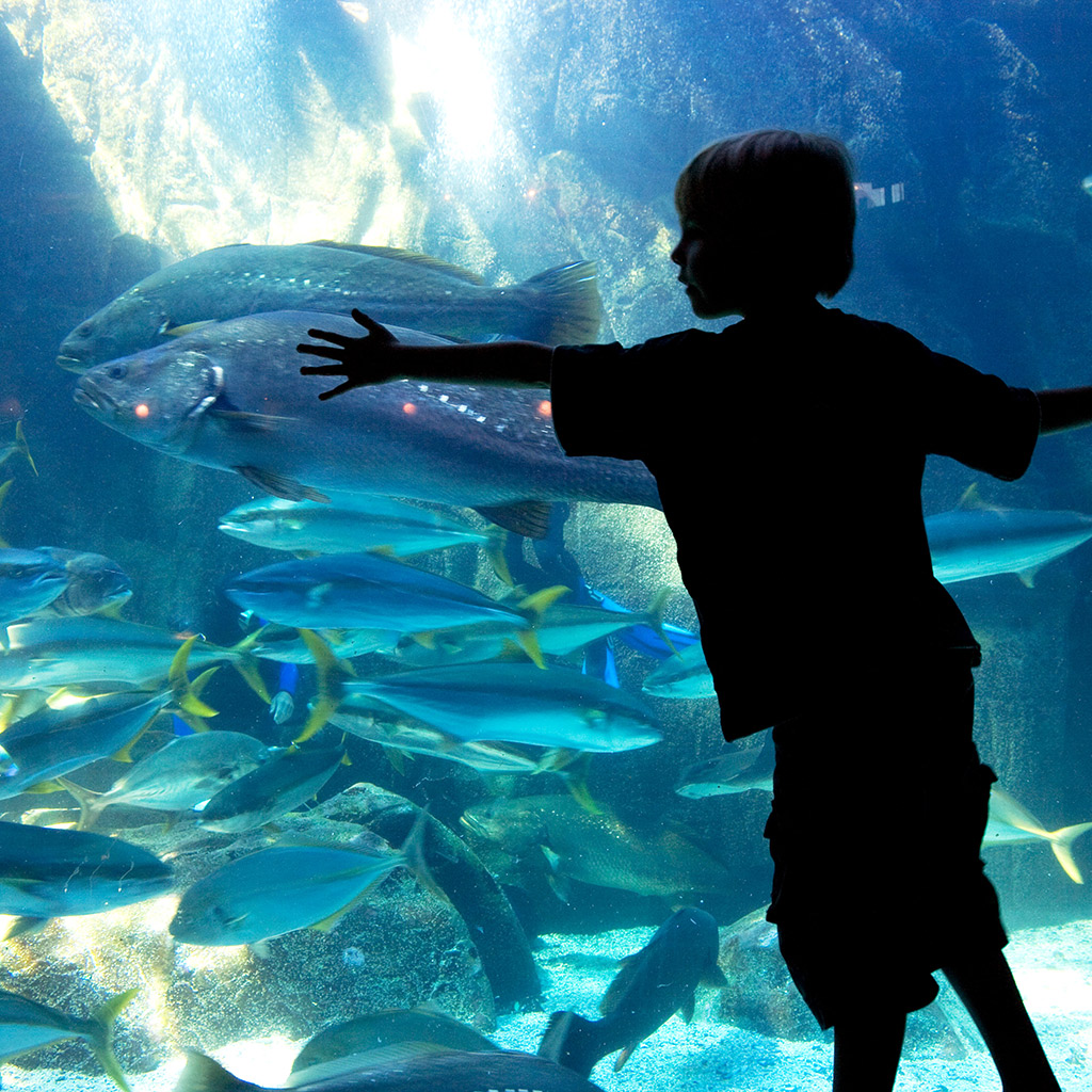 Top Things to Do with Kids in Cape Town