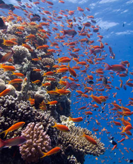 World's Greatest Diving Spots: Ras Mohammed National Park, Egypt
