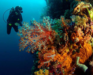 World's Greatest Diving Spots: Wakatobi Archipelago, Indonesia