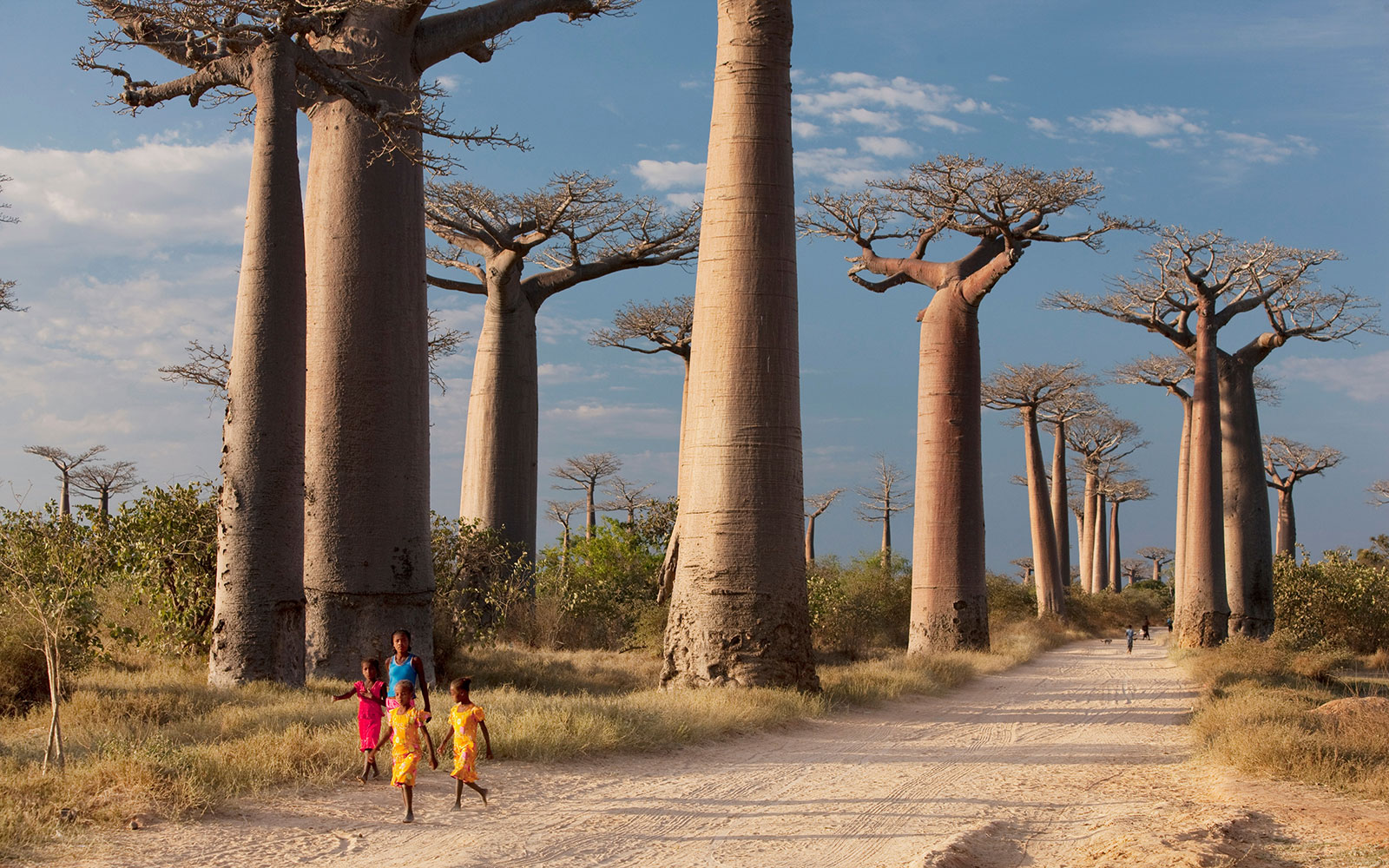 Madagascar's Avenue of the Baobabs