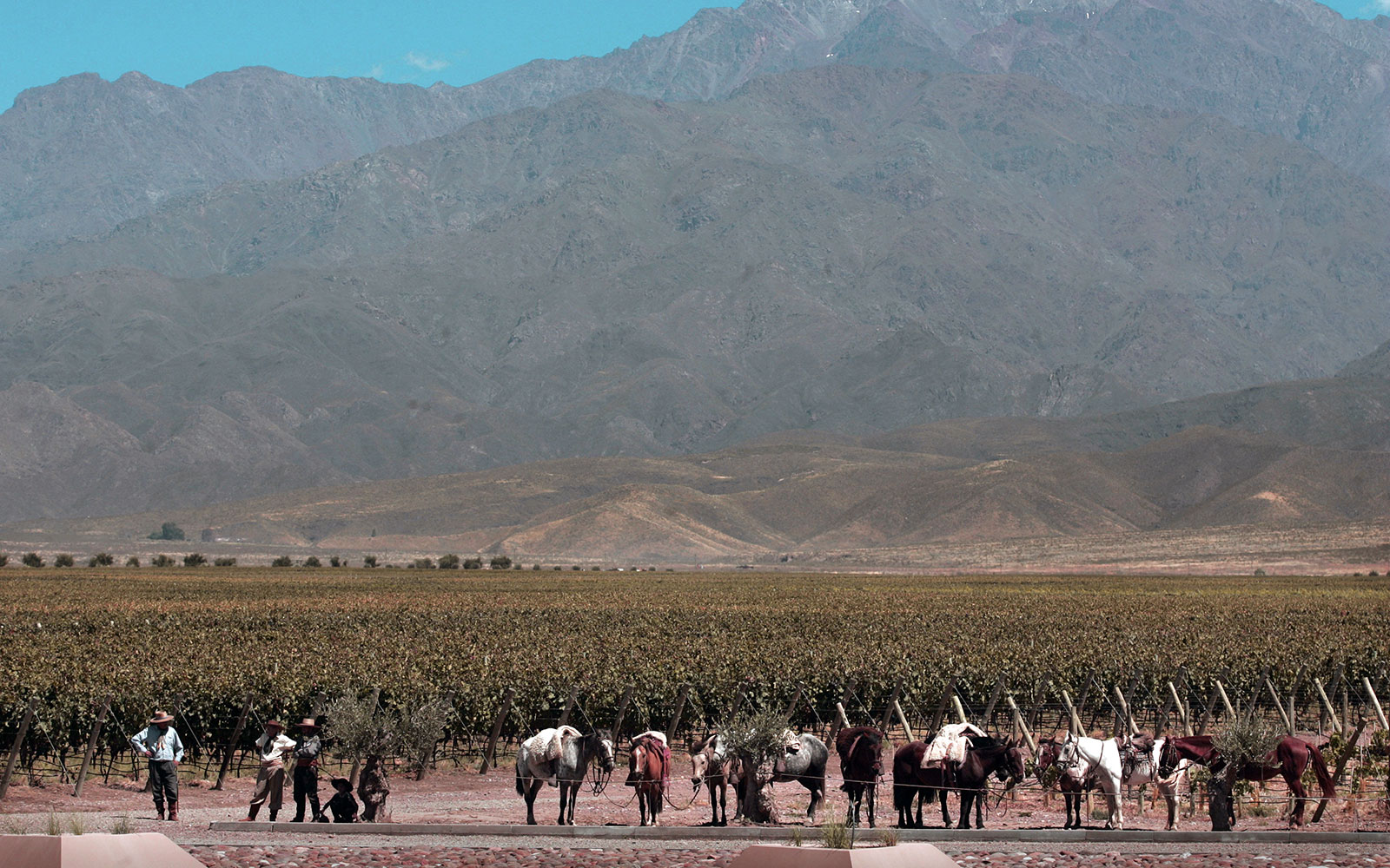 Tours Worth Taking: Winery Ride on Horseback in Mendoza, Argentina
