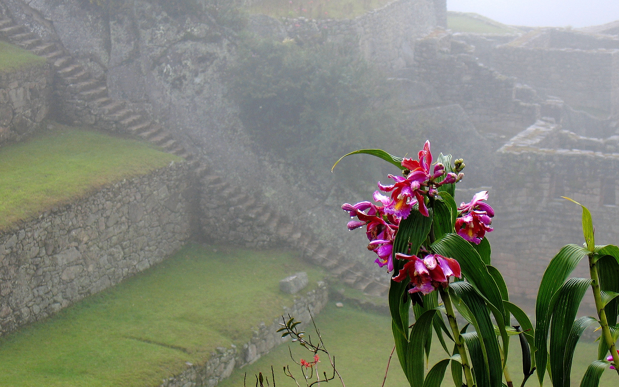MACHU PICCHU, PERU - MARCH 20:  Orchids grow at the Inca ruins of the Machu Picchu sanctuary on March 20, 2005 near Cusco, Peru. The 15th-century Inca site, MachuPicchu also known as 'The Lost City of the Incas' is situated high above the Urubamba River.