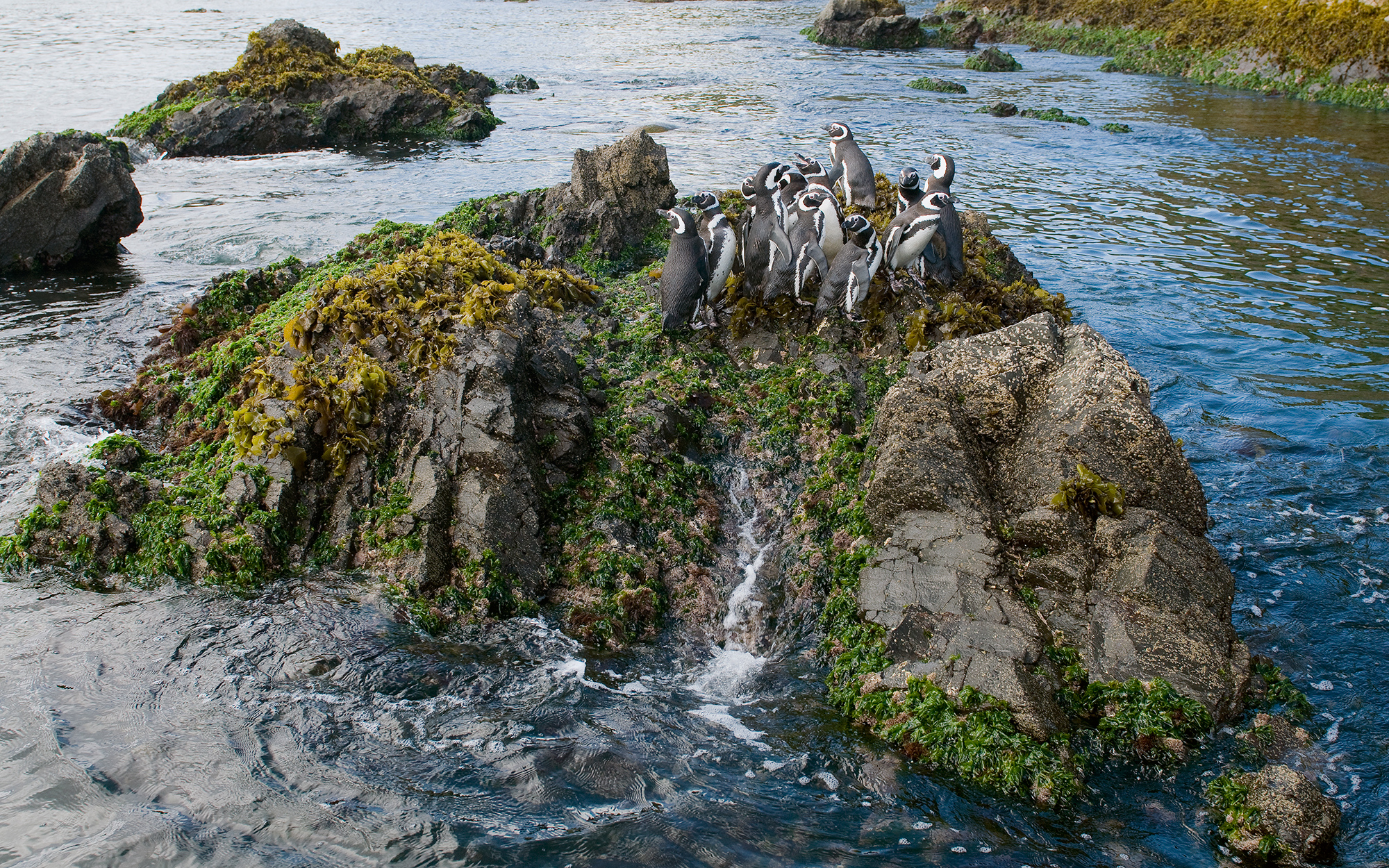 Where to See Penguins: Chile