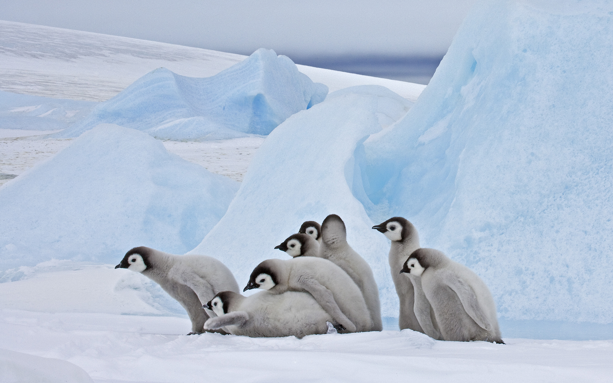 Where to See Penguins: Antarctica