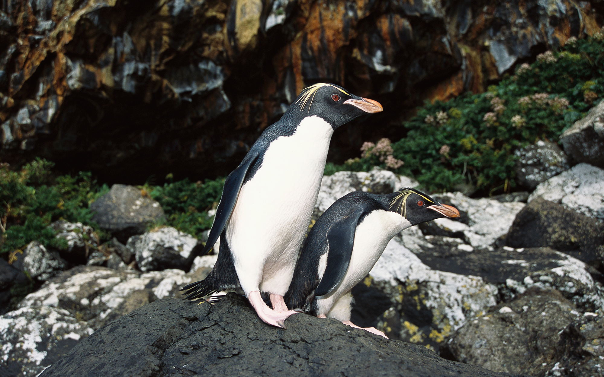 Where to See Penguins: New Zealand