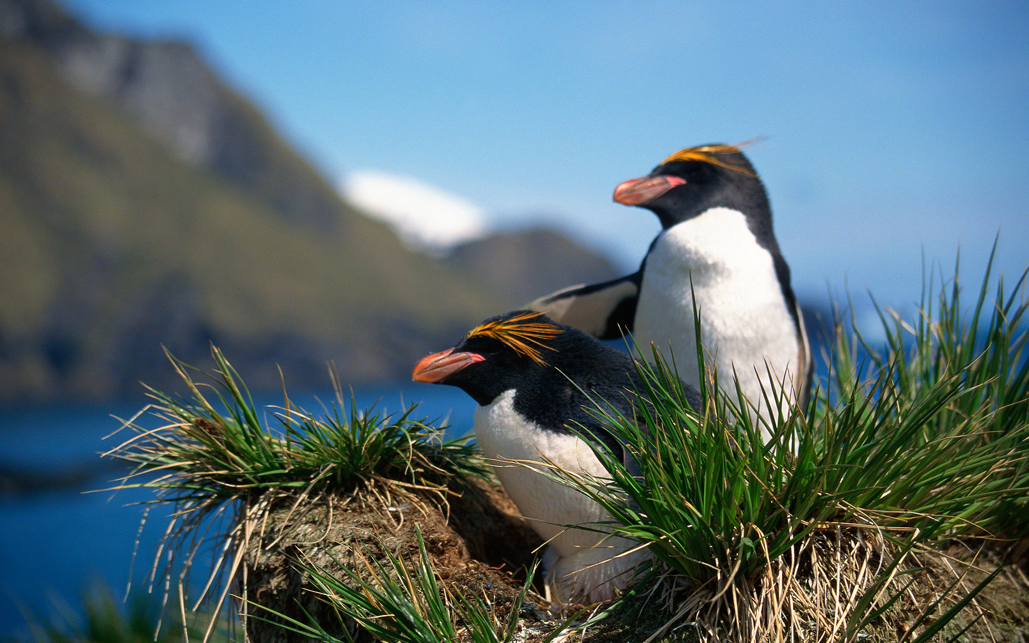 Where to See Penguins: Argentina
