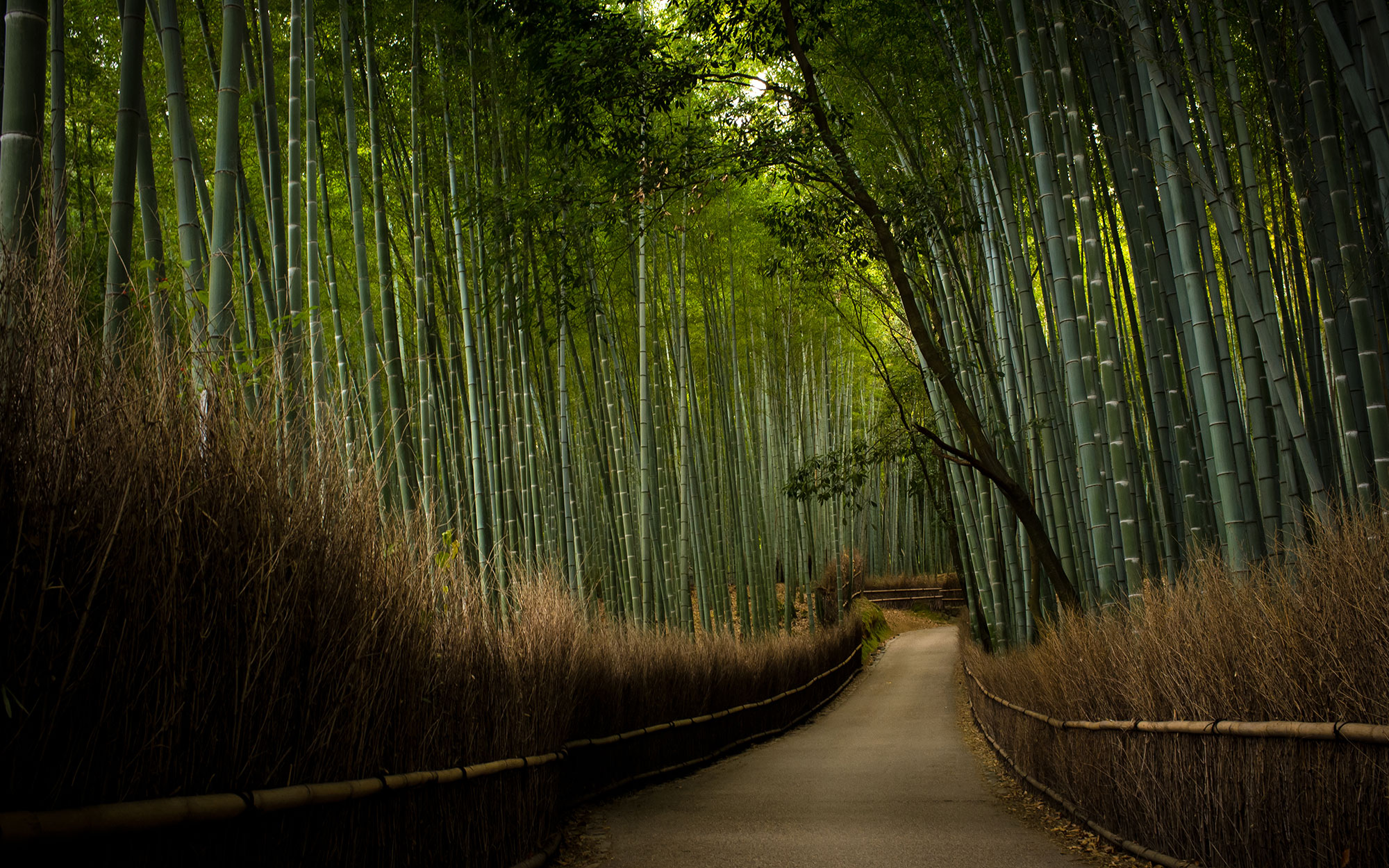 Bamboo Path, Tenryu-ji Temple