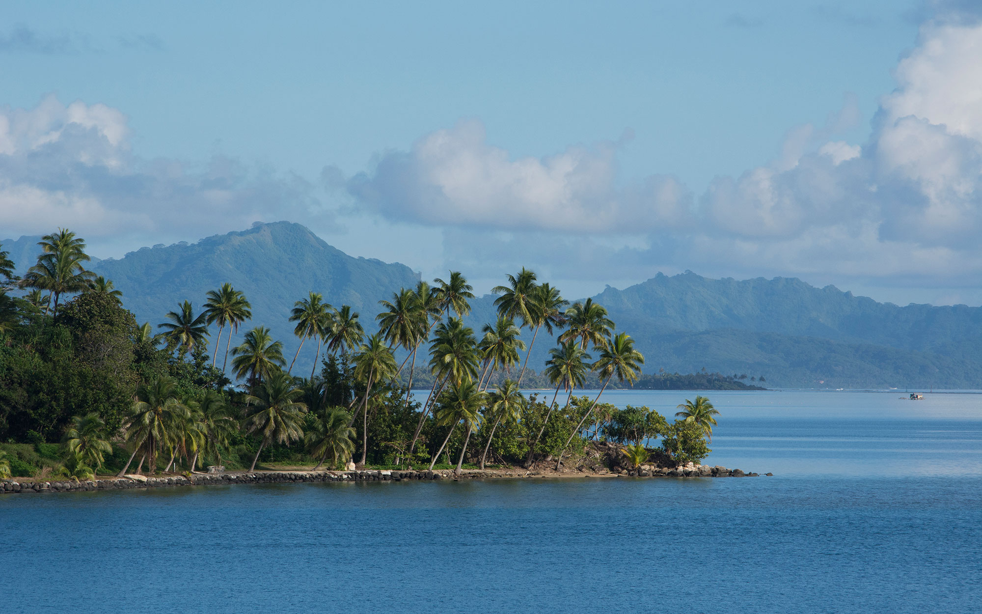 Scenic palm tree lined waterfront view, Faaroa Bay, Raiatea, French Polynesia, Society Islands