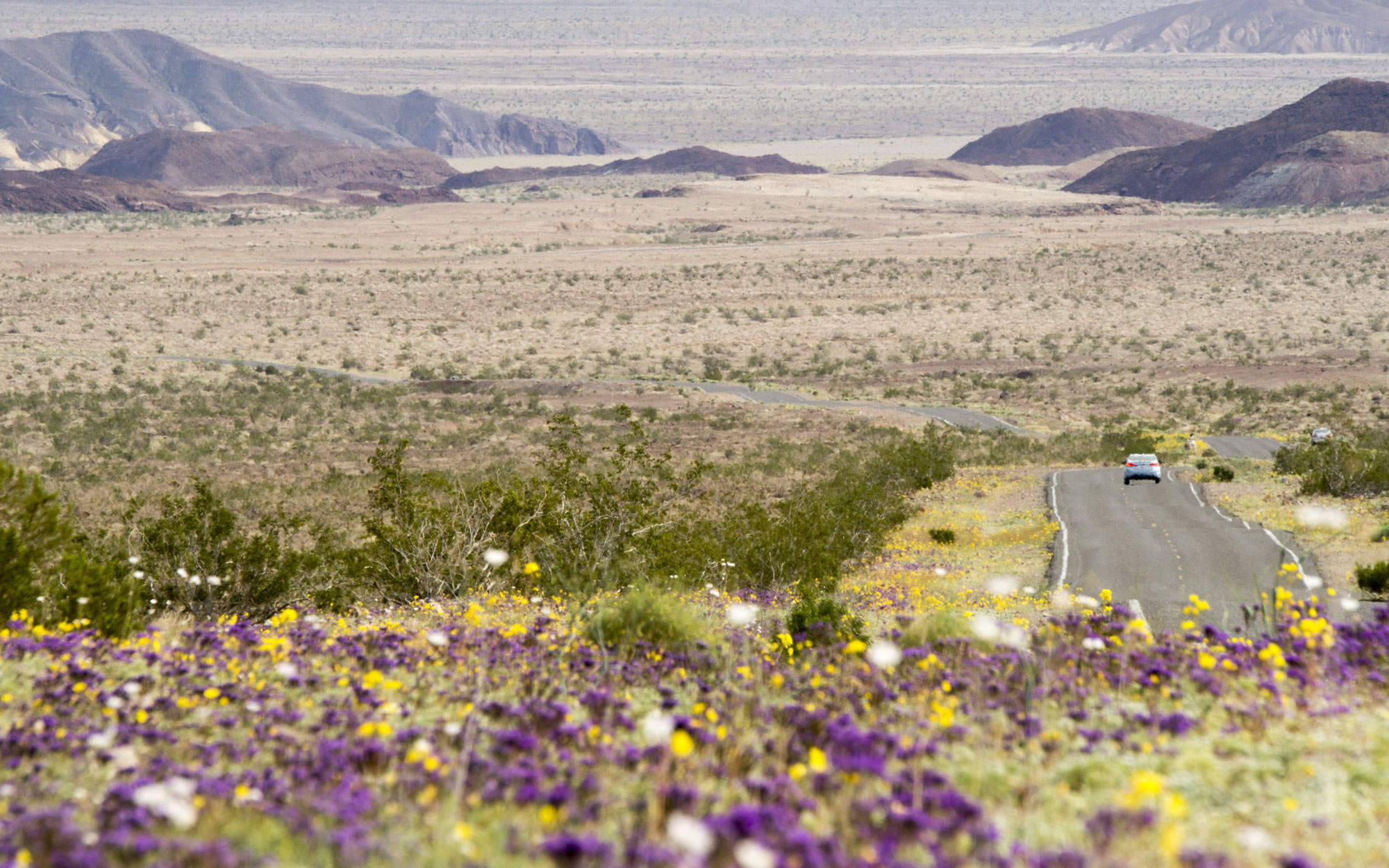 Death Valley's Rare, Beautiful 'Super Bloom'