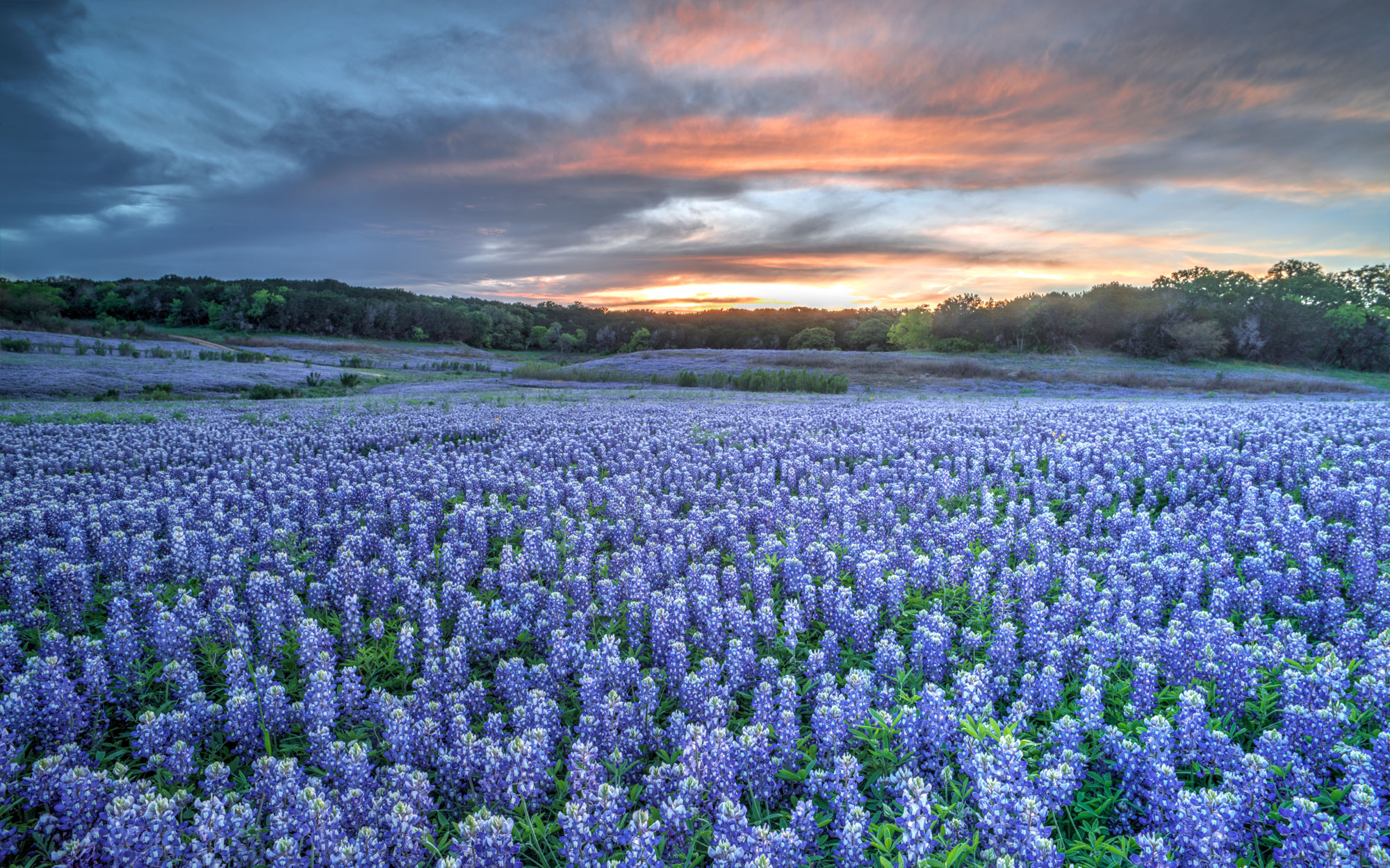 Photos of Texas Bluebonnets | Travel + Leisure