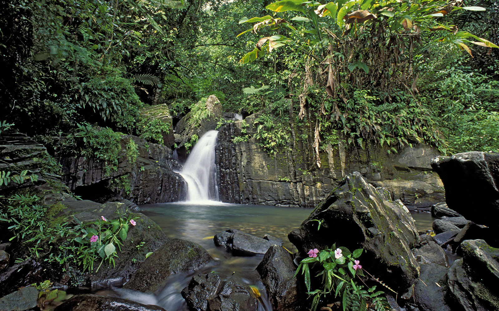 Puerto Rico - Waterfall