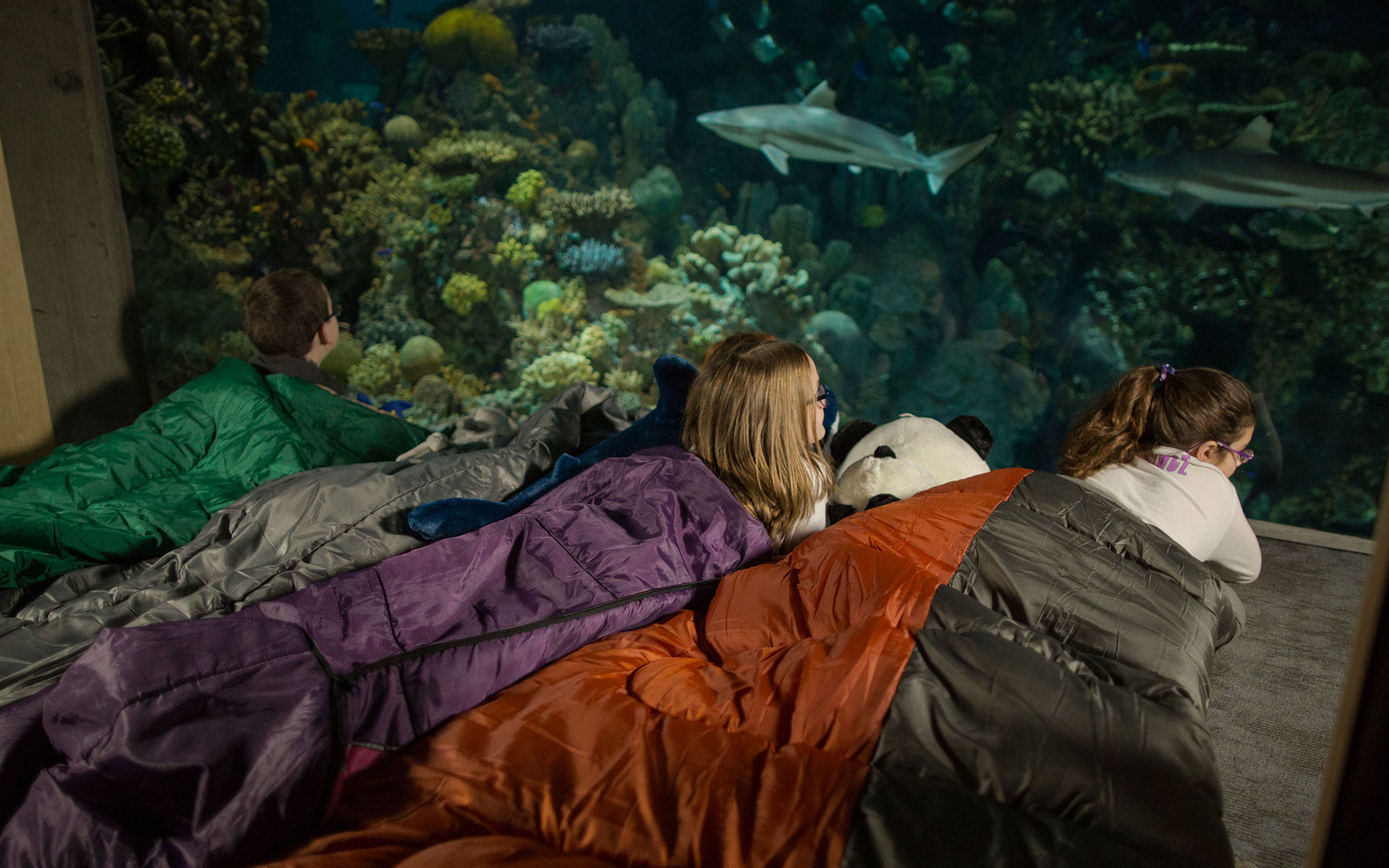 "Baltimore National Aquarium's ""Sleepover With the Sharks"""