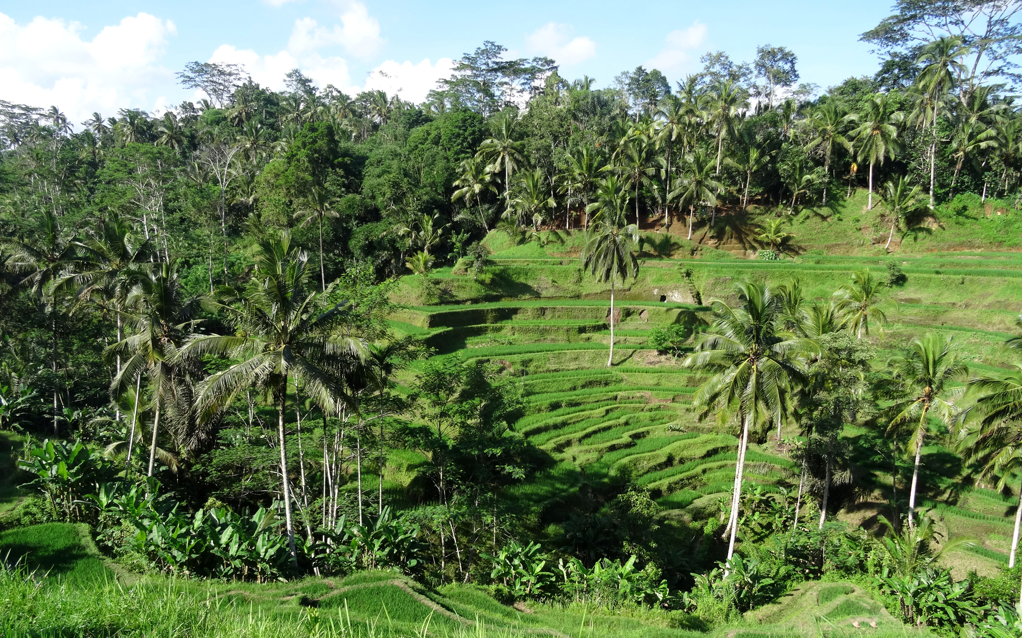 No. 7: Ubud, Indonesia