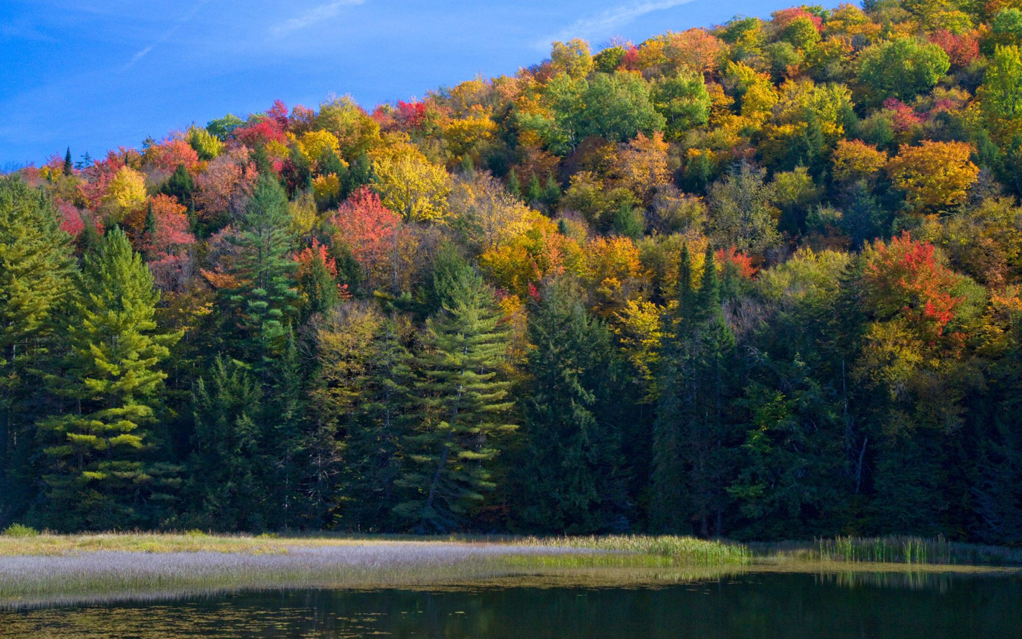 Great Fall Foliage in New England