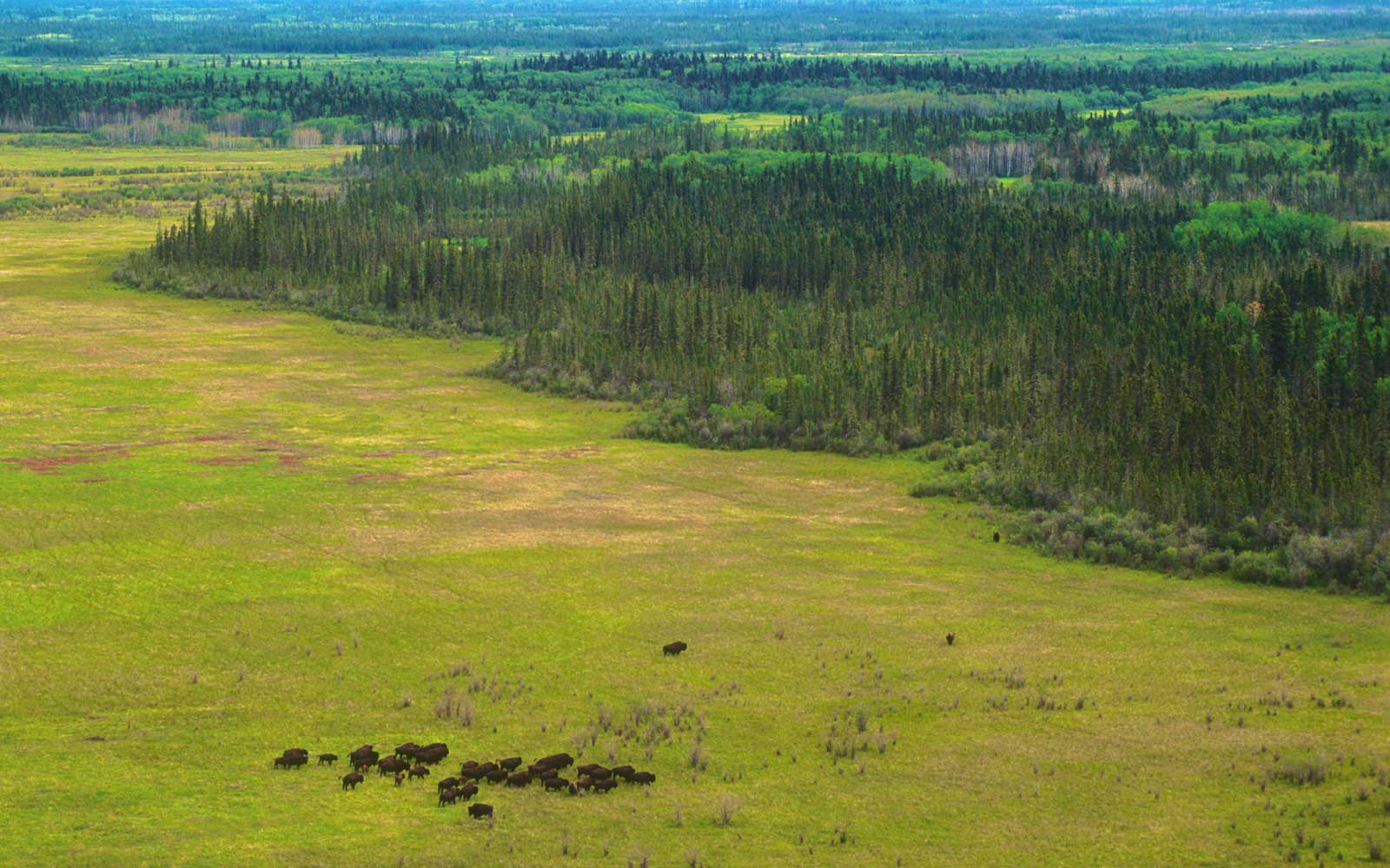 Wood Buffalo National Park